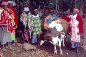 Eine der Kühe der Kapkitony Frauengruppe, die am Tag ca. 20 Liter Milch liefert